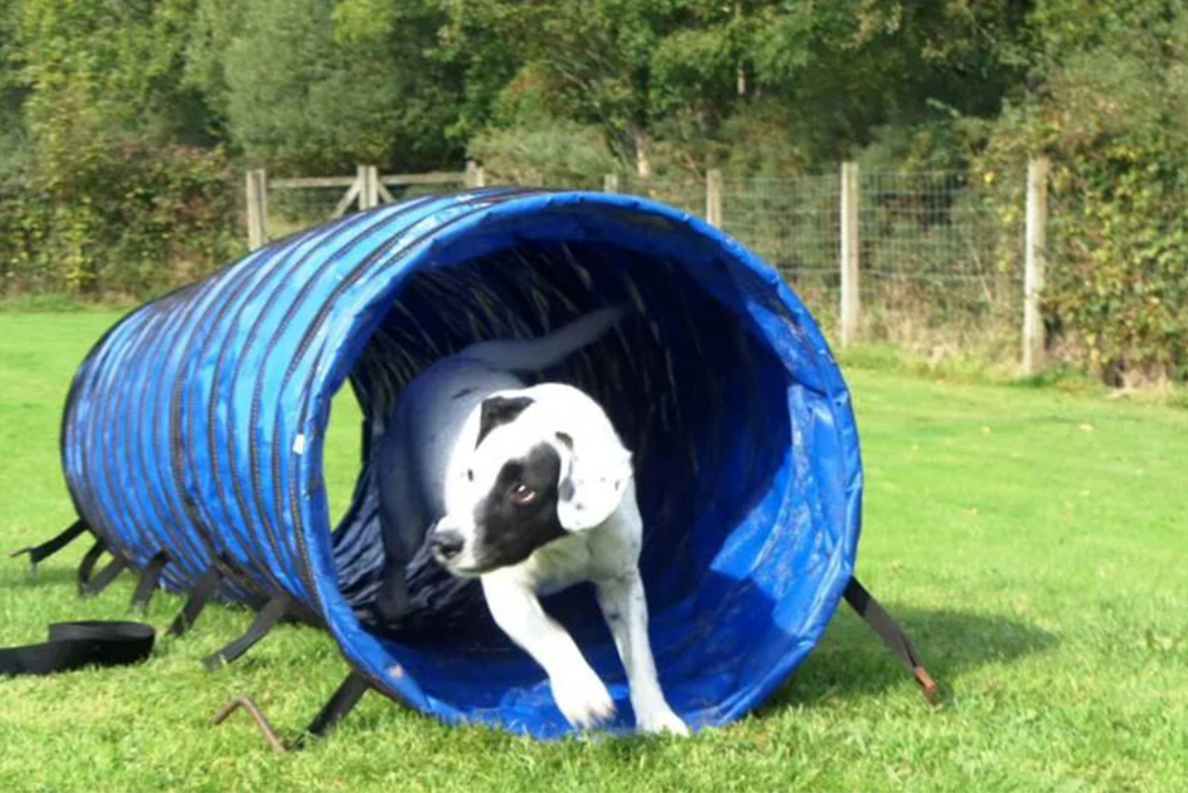 Doggy Day Care - Tunnel | K9focus