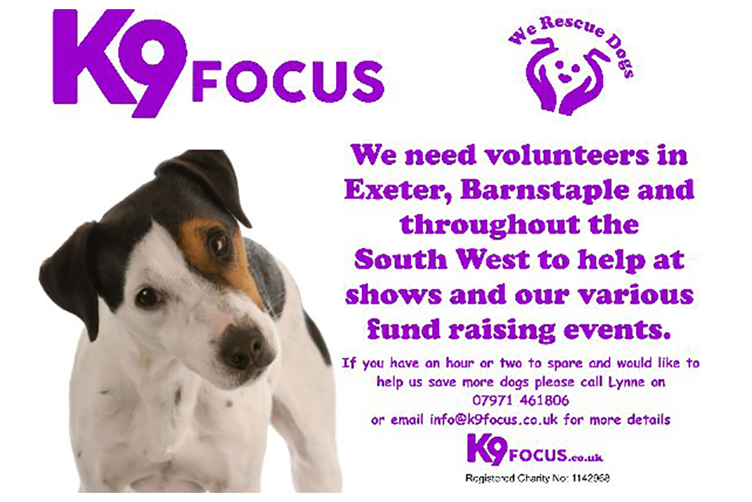 Volunteer | K9focus